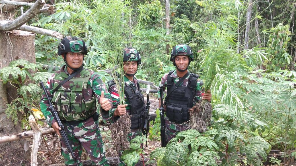Penyisiran Hutan Papua Satgas Raider 300 Menemukan Ladang Ganja