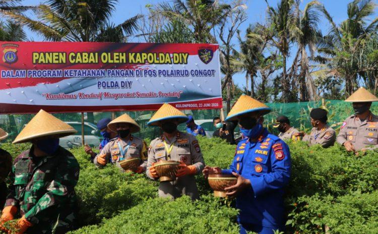 Dukung Ketahanan Pangan, Kapolda DIY Tanam Dan Panen Cabai Di Pos Ditpolairud Kulon Progo