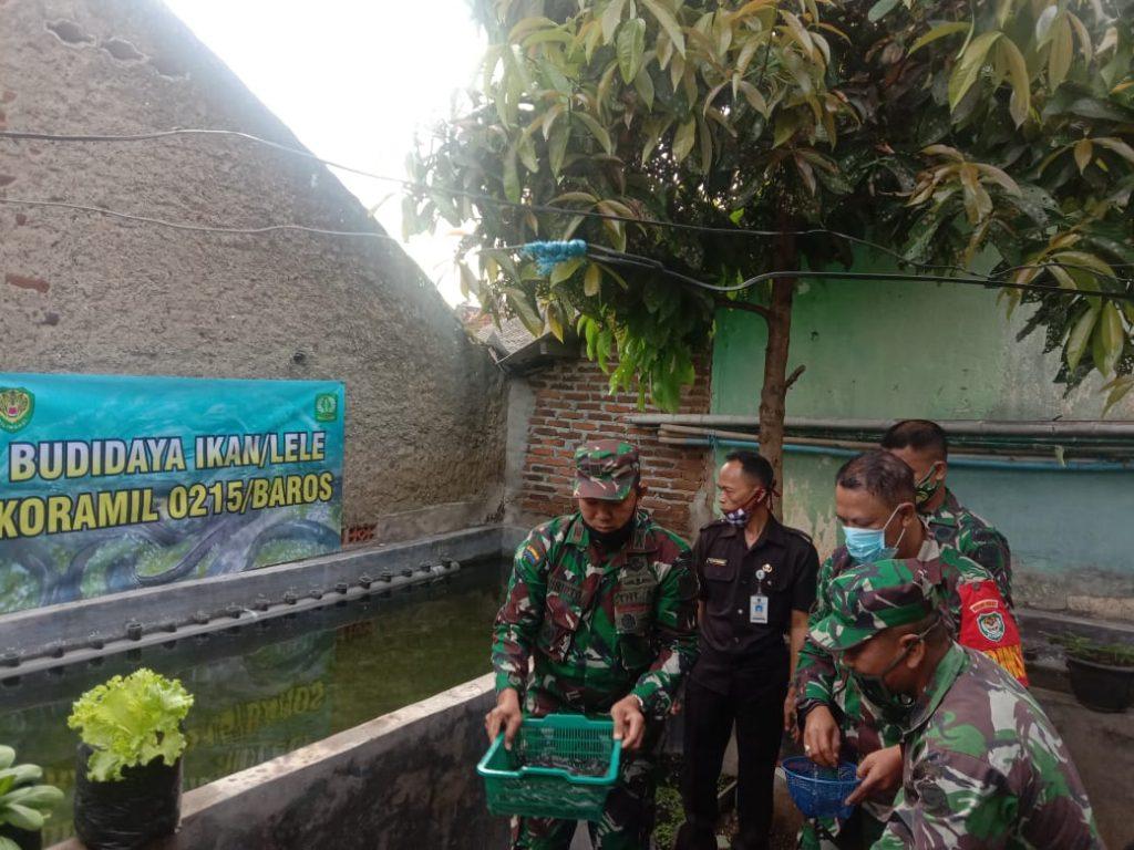 Atasi Krisis Pangan Ditengah Covid-19, Koramil 0215/Baros Budidayakan Lele