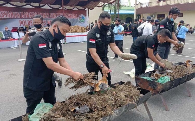 Polrestabes Medan Musnahkan 358 Kilogram Ganja