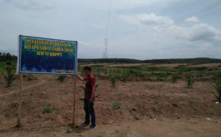 Di Afdeling 6, PTPN III Rantauprapat Lakukan Penanaman Perdana Kelapa Sawit