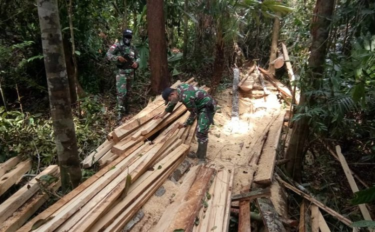 Satgas Yonif 642/Kapuas Amankan Kayu HasilIllegal LoggingDiwilayah Perbatasan